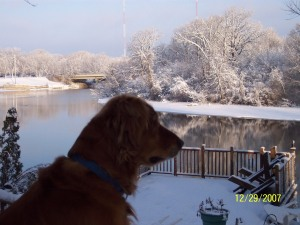 Rusty overlooking yard in winter