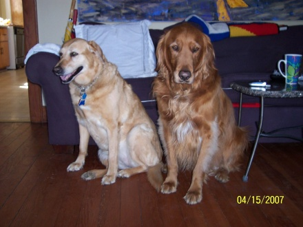 Rusty and Princess sitting 2007
