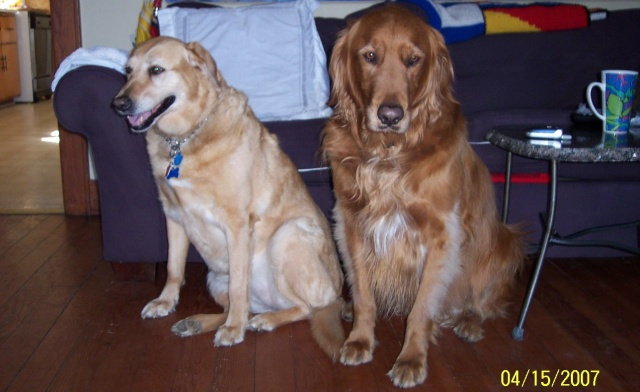 Rusty and Princess sitting 2007