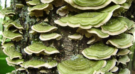 green fungus on tree
