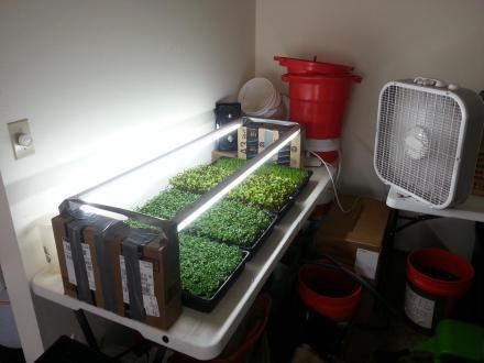 Tonys micro grow setup